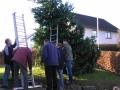 Weihnachtsbaum 017