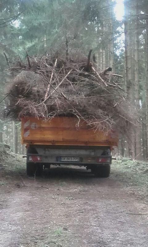 Holz holen12